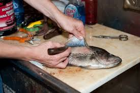 taxidermie ryb